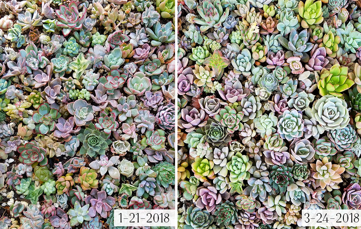 Cutting & Using Glue on Succulents - Jen Tao - Botanical Bright