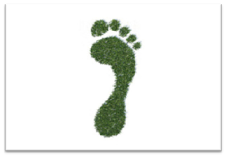 What's the difference between our ecological and our carbon footprints?