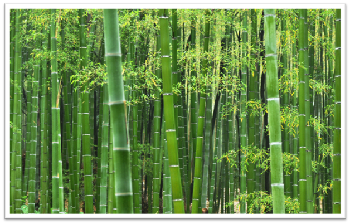 Is Bamboo Really Green?