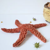 handmade in Italy ceramic starfish from Apulia Grottaglie Fasano