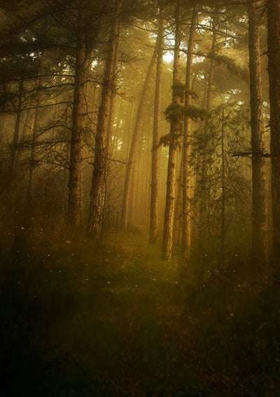 Forest trees and fireflies backdrops