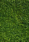 Spring natural lawn background St. Patrick's Day backdrops-cheap vinyl backdrop fabric background photography