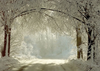Winter forest backdrop Snow-covered road for wedding photos-cheap vinyl backdrop fabric background photography