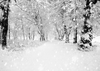 Snowflakes and forest for winter photography backdrop