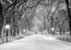 Winter photography park road and big tree backdrop