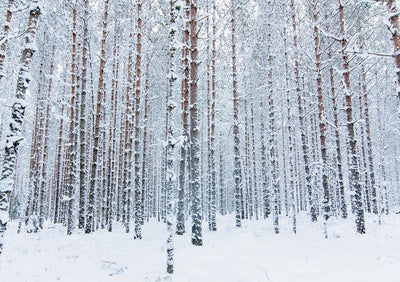 Snowflakes and trees for winter forest backdrops