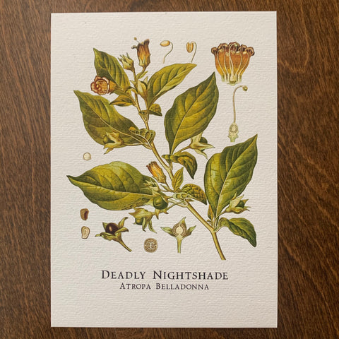 Deadly Nightshade Print