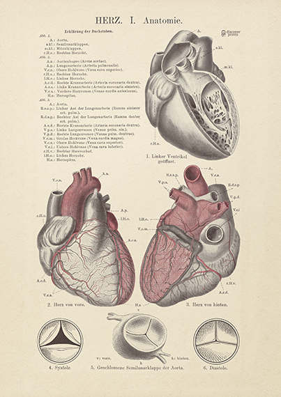Coloured Human Heart Art Print