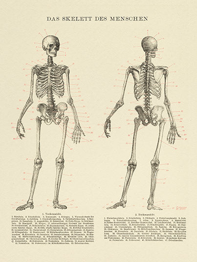 Human Skeleton Medical Art Print