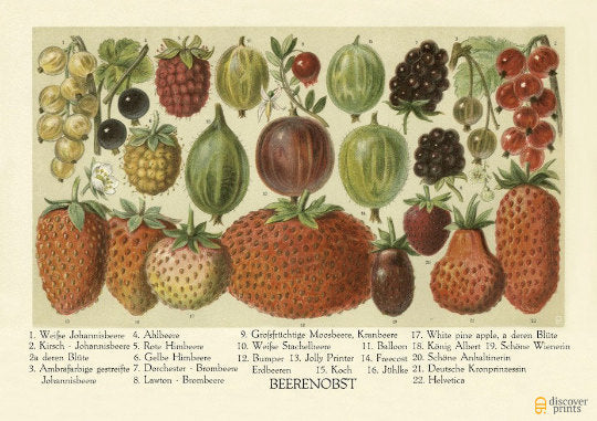 Strawberry Print - Sweet Berries Poster - Vintage Botanical Illustration - Vintage Strawberry Poster - Museum Quality