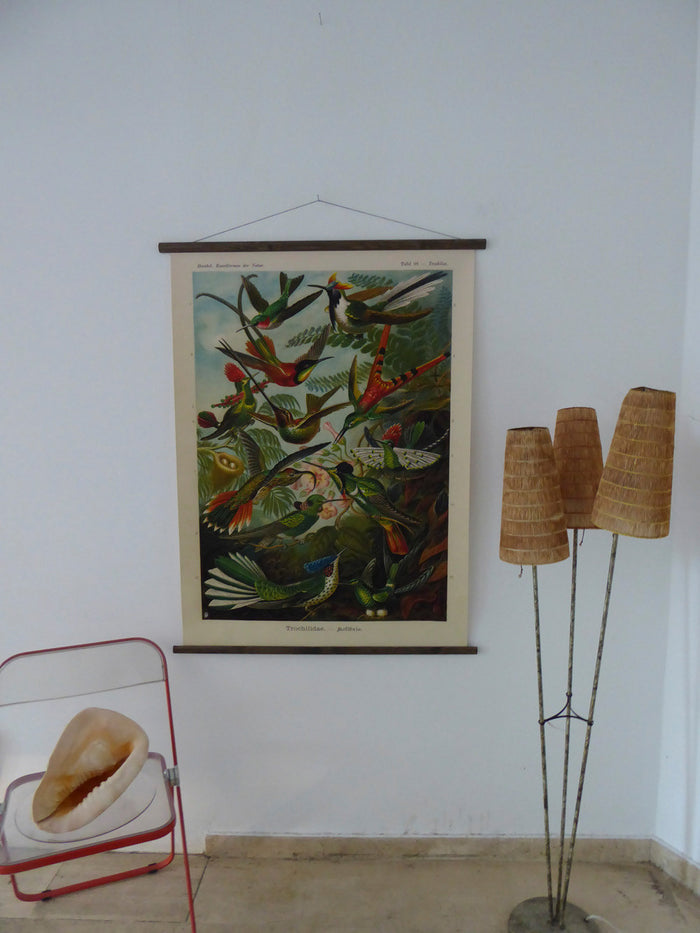 Large Hummingbird Vintage Wall Chart