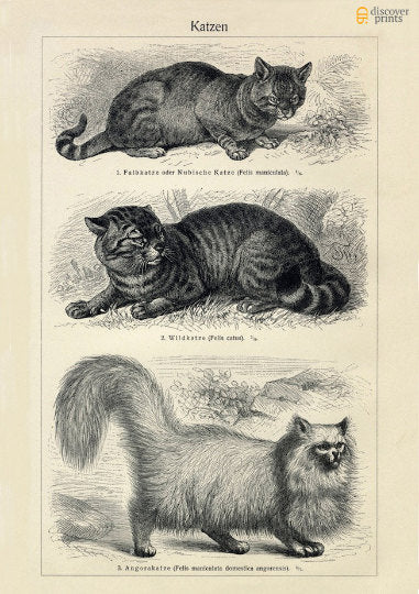 Cats Art Print - Animal Illustration - Antique Style Wall Art - Museum Quality