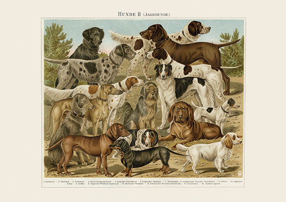 Hunting Dogs Art Print - Vintage Dog Illustration - Animal Lover Wall Art Rescue Dog - Museum Quality