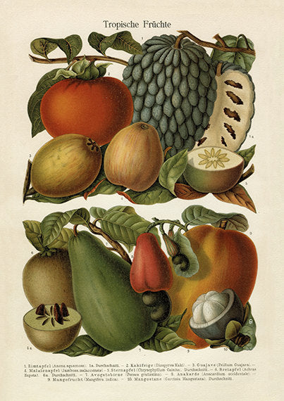 Tropical Fruit Art Print - Botanical Fruit Illustration - Kitchen Chef Wall Art - Museum Quality