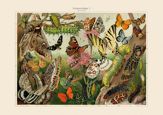 Colorful Butterflies and Moths Art Print - Butterfly Illustration - Wedding Gift - Museum Quality