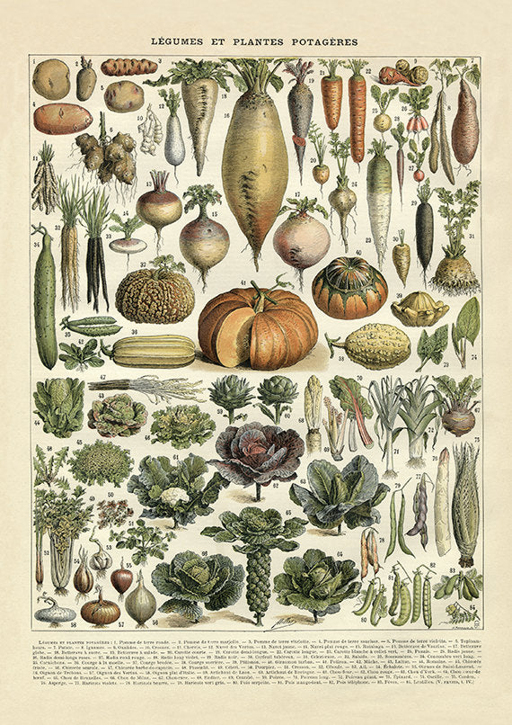Vegetable French Art Print - pumpkin, cucumber, tomato, carrots, pepper, squash, lettuce, onion, potato, brussel sprouts, herbs