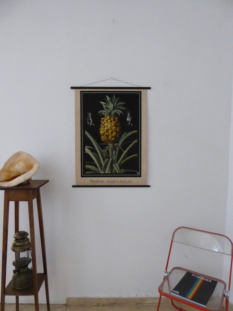 "Large A1 (25"" x 33"") Pineapple Poster - Vintage Pineapple School Chart -Pineapple Pull Down Chart - Museum Quality"