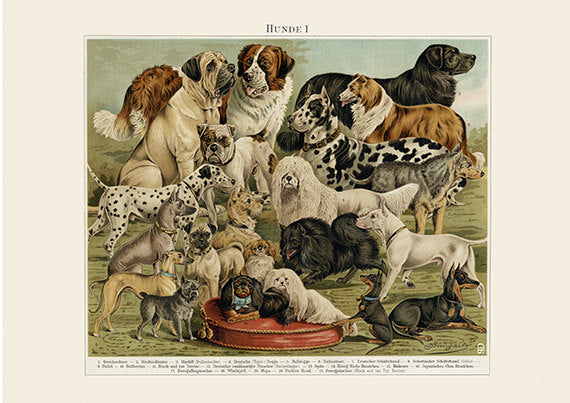 Dog Breeds Art Print - Vintage Dog Illustration - Animal Lover Wall Art Rescue Dog - Museum Quality