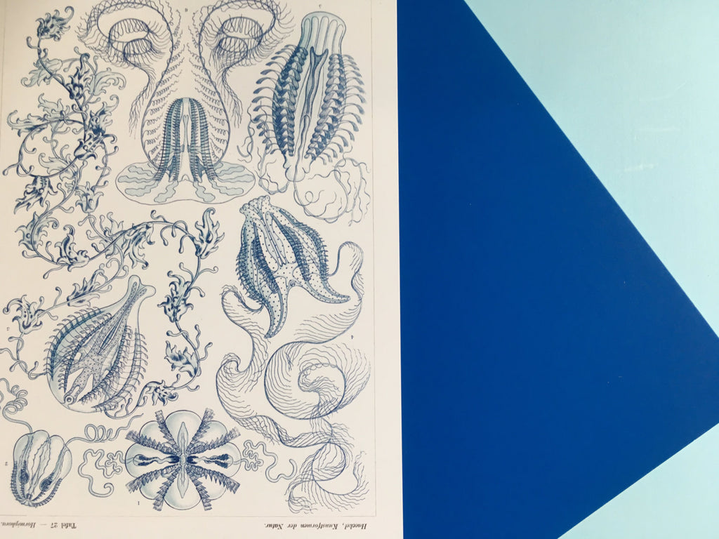 Ernst Haeckel Blue Jellyfish Art Print