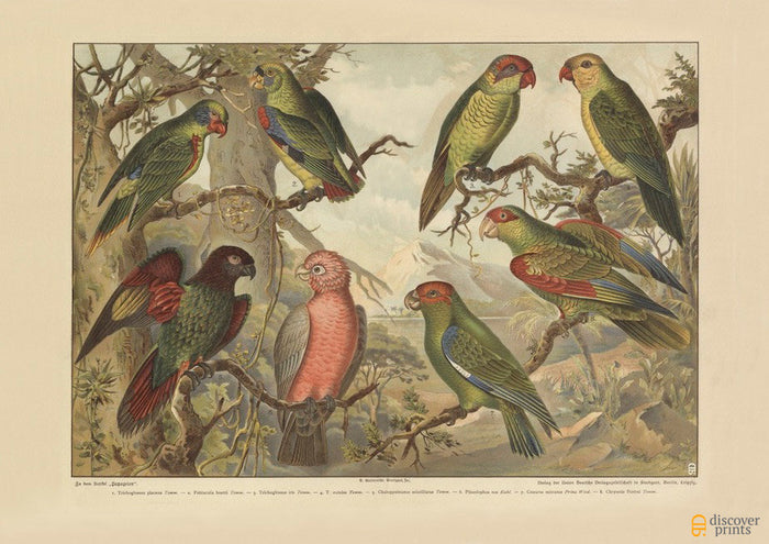 Parrots Art Print - Vintage Animal Giclee - Nature Wall Art