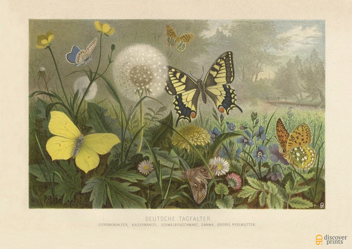 Butterflies & Dandelions Art Print - Vintage Botanical Illustration - Science Wall Art