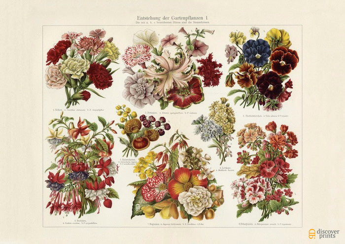 Assorted Blossoming Flowers - Botanical Art Print