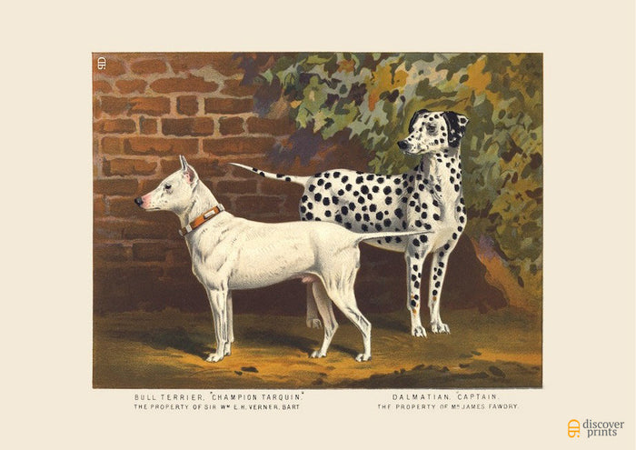 Bull Terrier and Dalmatian Art Print - Vintage Dog Illustration - Animal Lover Wall Art Rescue Dog - Museum Quality