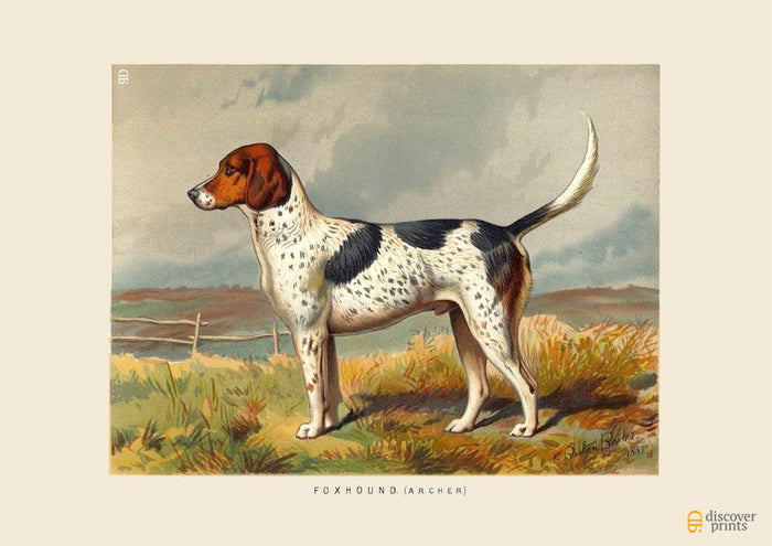 English Foxhound Art Print - Vintage Dog Illustration - Animal Lover Wall Art Rescue Dog - Museum Quality