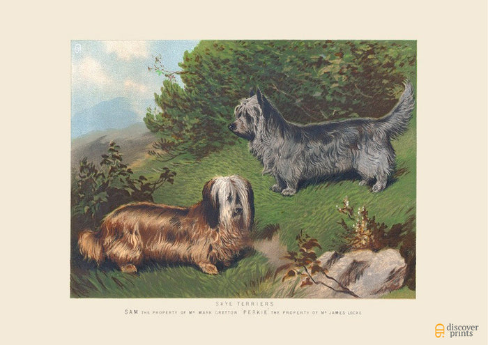 Skye Terrier Art Print - Vintage Dog Illustration - Animal Lover Wall Art Rescue Dog - Museum Quality