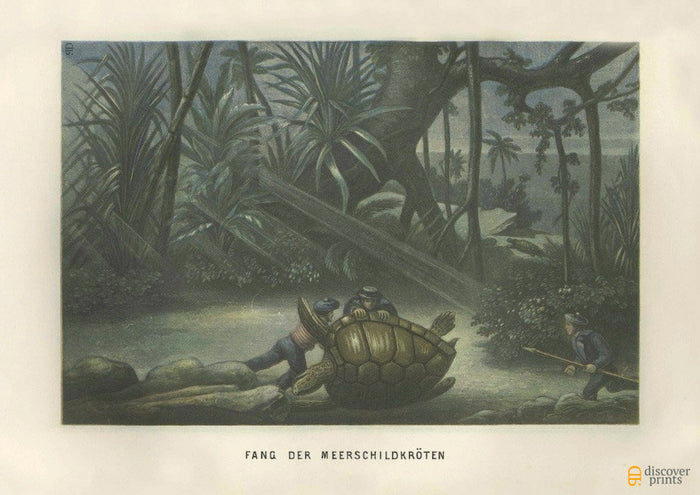 Seaturtle Hunting Art Print - Vintage Turtle Print   -  Galapagos 19th century - Wall Art - Museum Quality