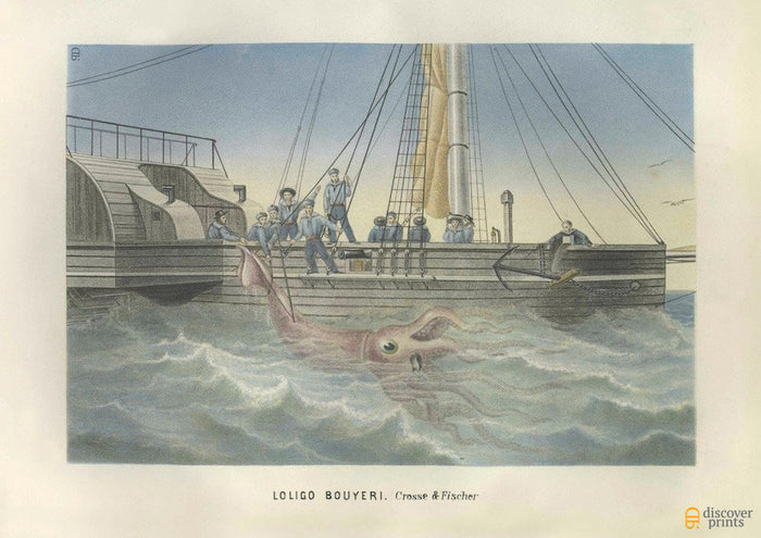 Giant Squid Kraken Art Print - Vintage Marine Illustration - Nautical Wall Art - Museum Quality