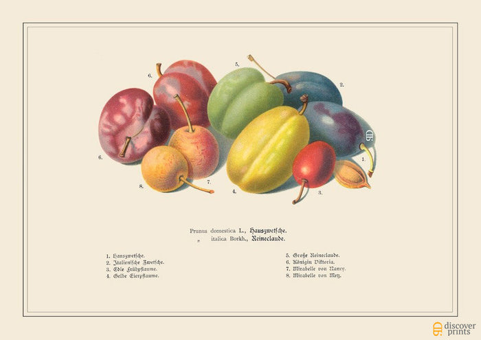Colorful Pretty Plums Art Print - Botanical Fruit Illustration - Wedding Gift - Museum Quality