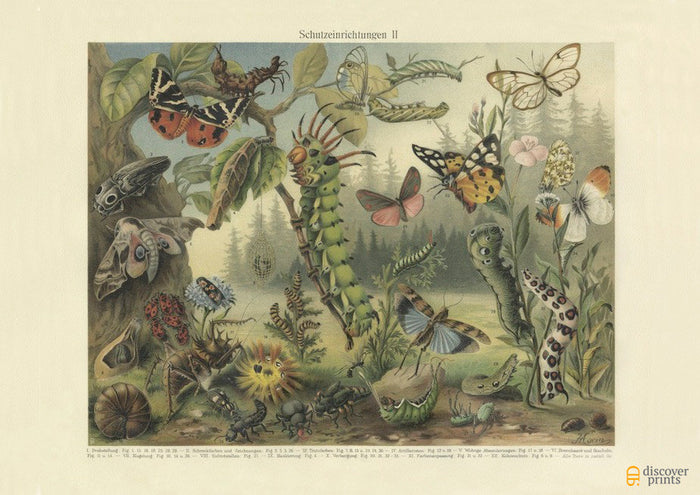 Insect Defenses Art Print - Vintage Insect Illustration - Science Wall Art - Museum Quality