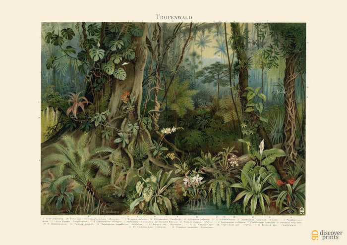 Tropical Rainforest Art Print - Vintage Botanical Illustration - Fine Wall Art - Museum Quality