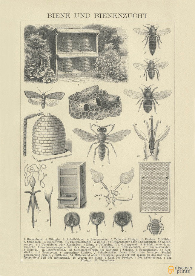 Beekeeping Art Print - Vintage Botanical Illustration - Antique Wall Art - Museum Quality
