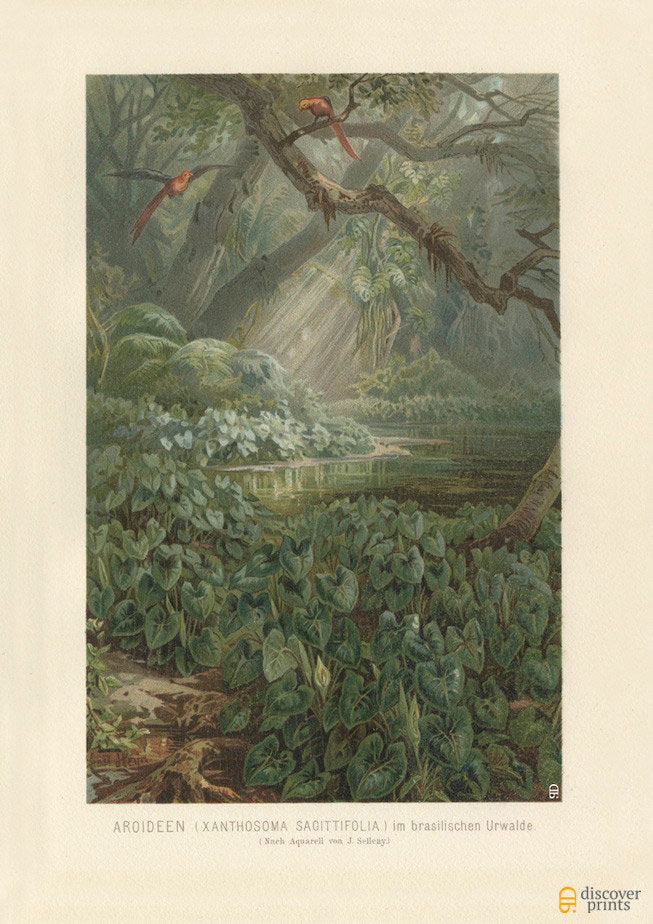Vintage Brazilian Tropical Forest Print - Elephant Ear Art Print - Vintage Botanical Illustration - Antique Wall Art - Museum Quality