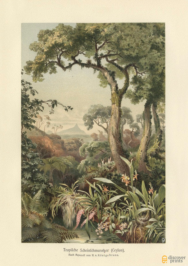 Tropical Jungle Art Print - Vintage Southeast Asia Illustration - Antique Wall Art - Museum Quality