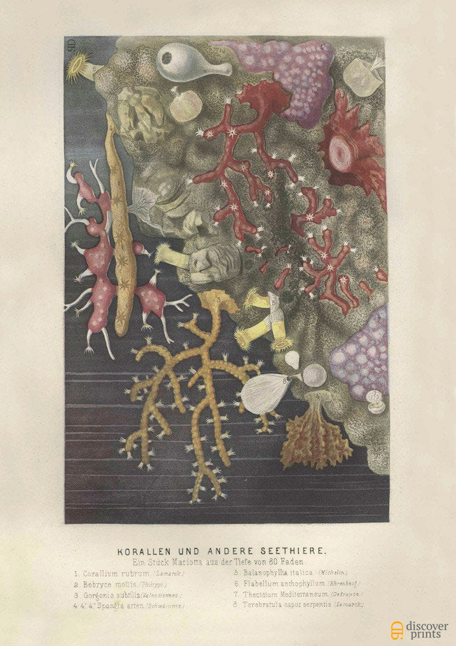 Assorted Colorful Sea Coral Art Print - Marine Beach House Wall Art Pastels - Museum Quality