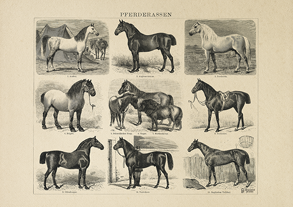 Beautiful black and white tableau of old horse breed (1900) - Vintage Horse poster - Animal farming poster