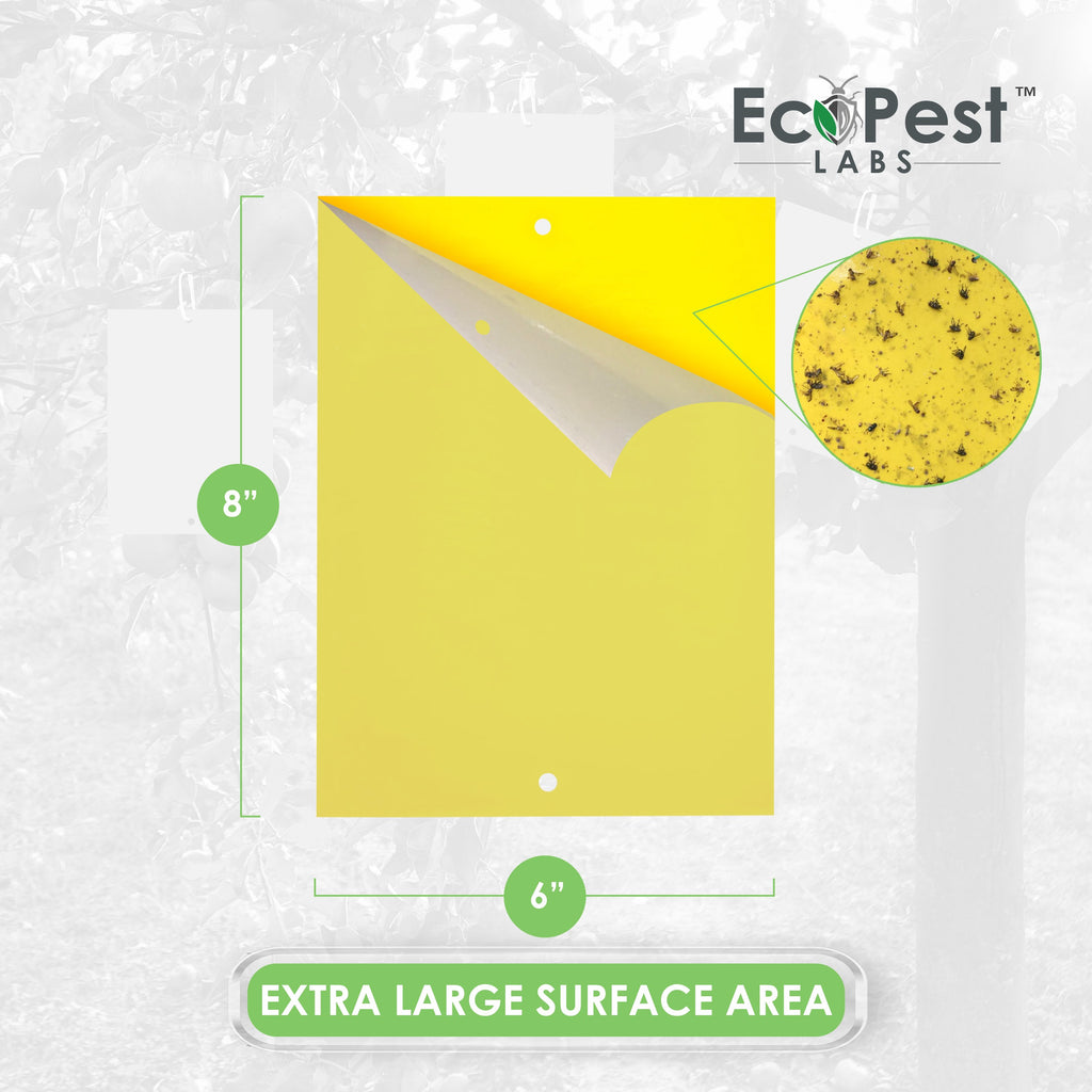Extra-Wide Sticky Fly Traps (Yellow) — 20 Pack by EcoPest Labs