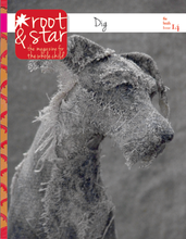 Issue Fourteen - Root and Star