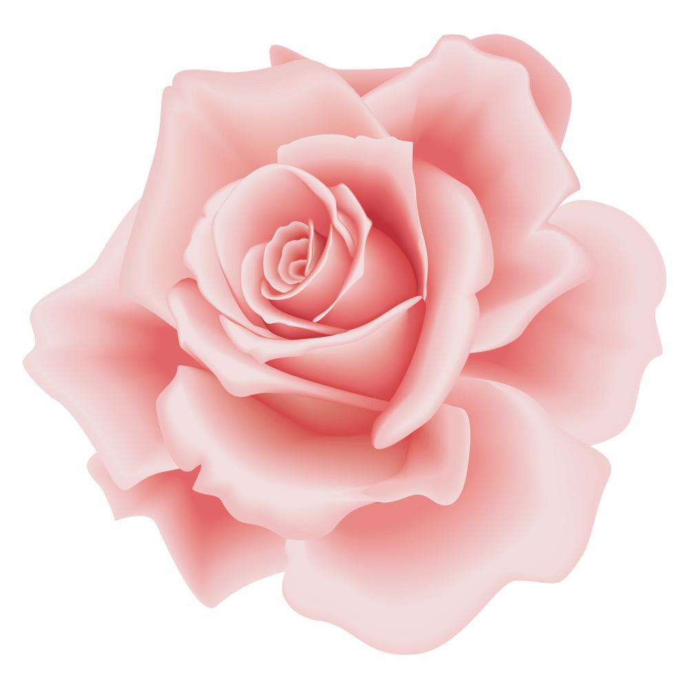 Pink Rose Flower Wall Mural Sticker