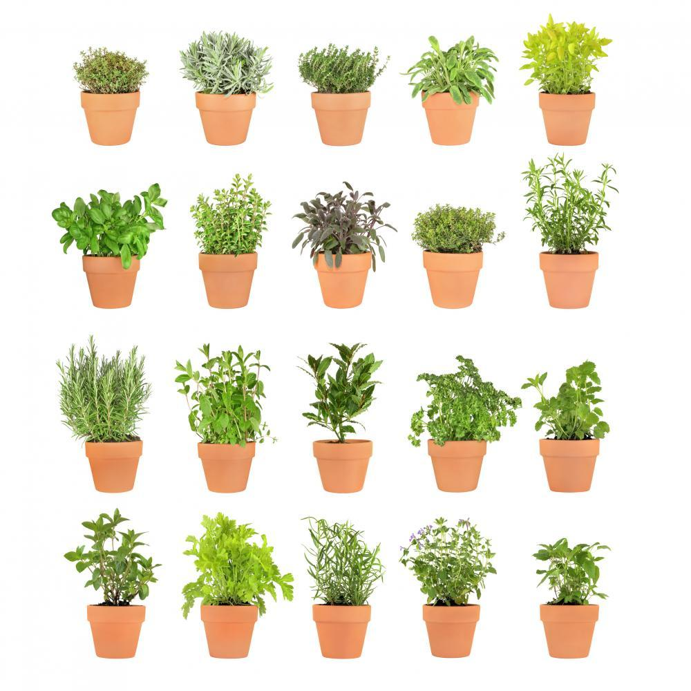 Herbs Pots Object Wall Mural
