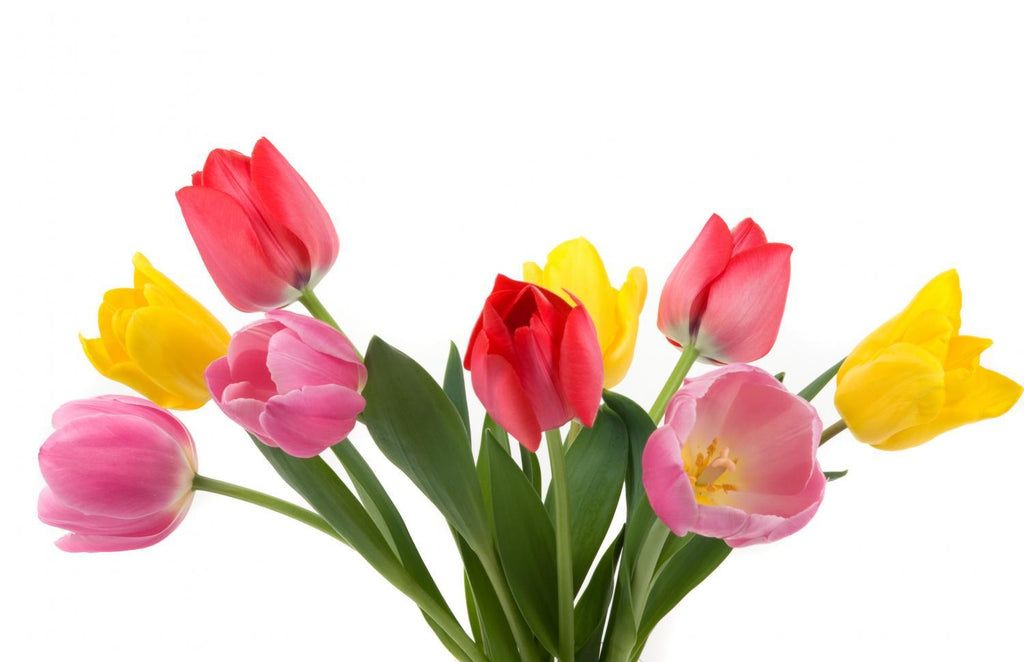 Beautiful Spring Tulips Flower Wall Mural Sticker - Flower-Wall-Stickers - Decall.ca