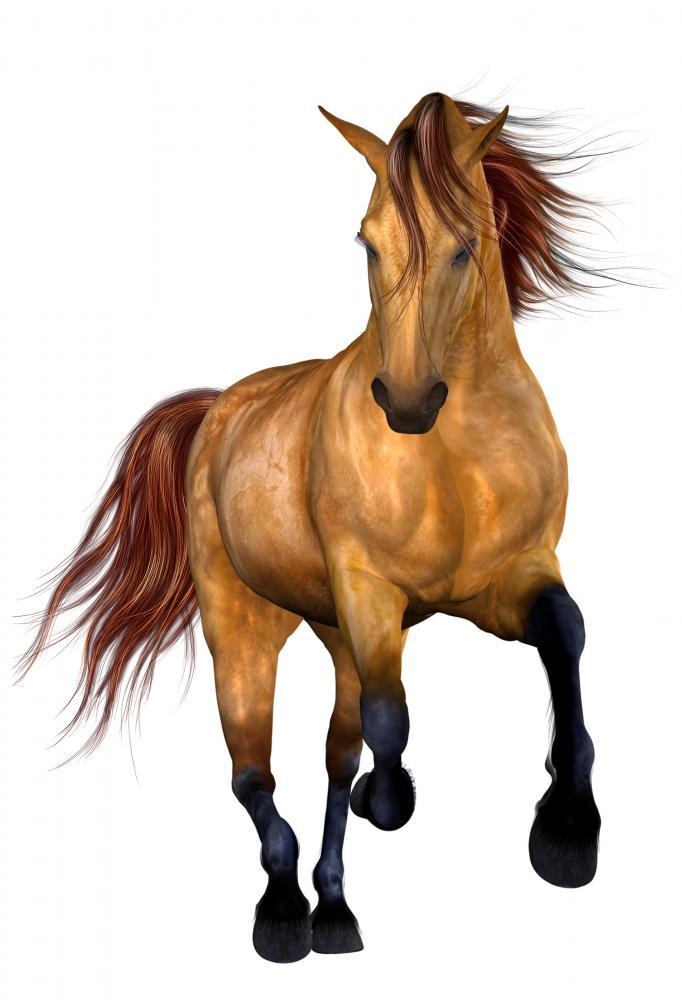 Beautiful Horse Animal Wall Mural - Animal-Wall-Stickers - Decall.ca