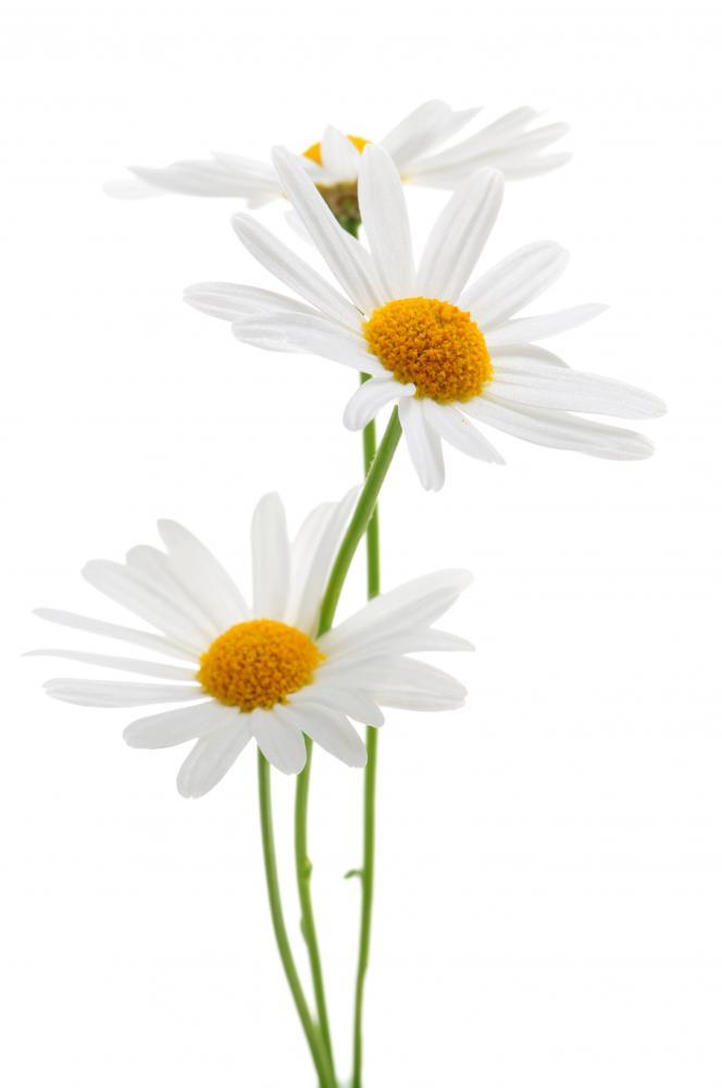 Daisies White Flower Wall Mural Sticker - Flower-Wall-Stickers - Decall.ca