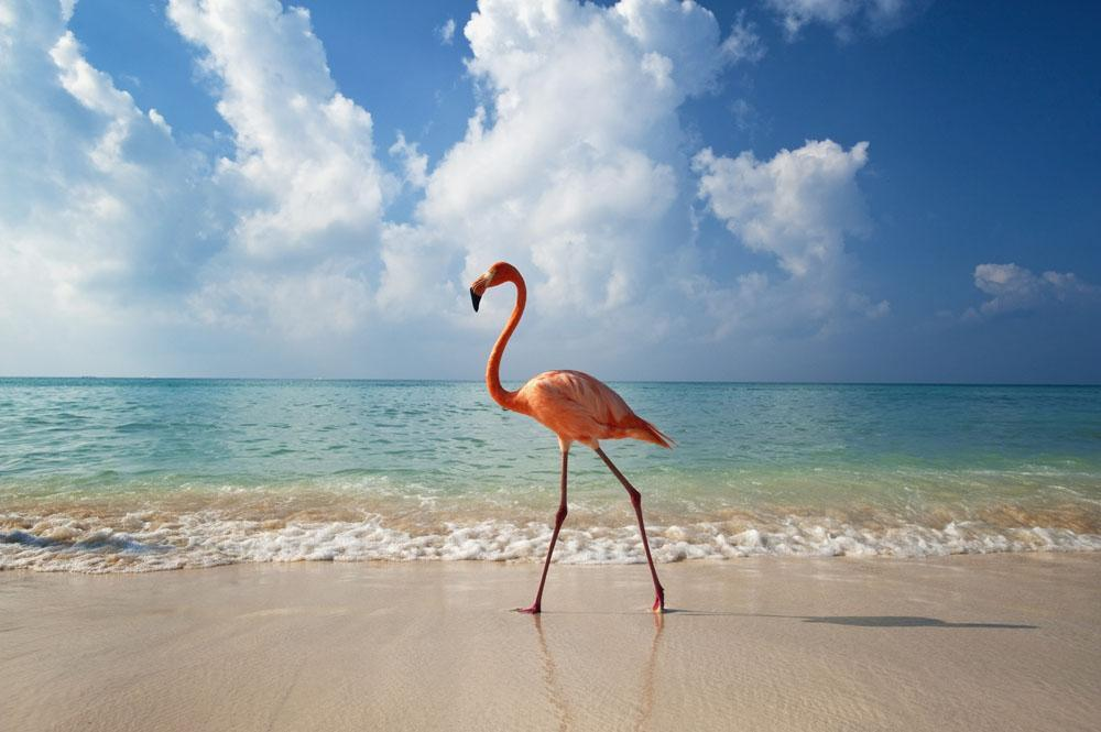 Flamingo Walking along Beach Animal Wall Mural