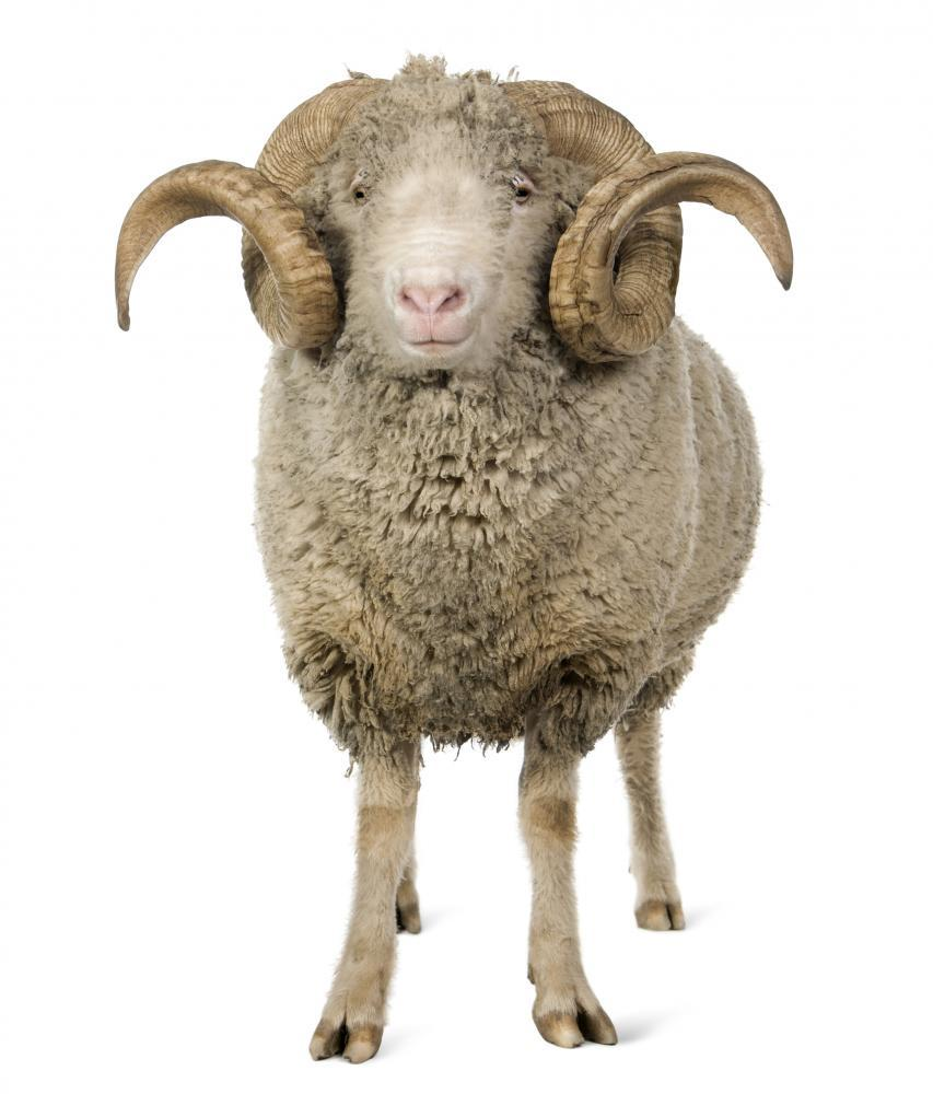 Sheep Ram Standing Wall Sticker