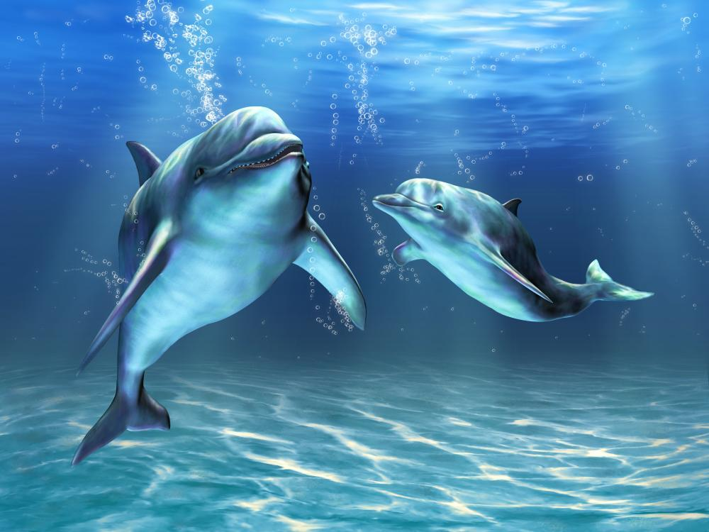 Dolphins Wall Mural - Animal-Wall-Murals - Decall.ca