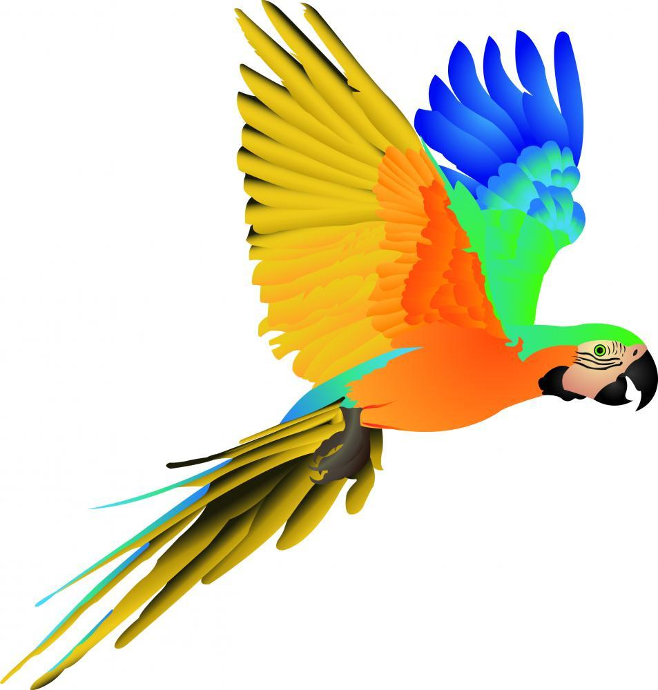 Blue Macaw Parrot Flight Animal Wall Mural - Animal-Wall-Stickers - Decall.ca
